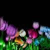China Light Festival - Ouwehand-0331